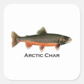 Vintage Arctic Char Illustration - Breeding Male Square Sticker