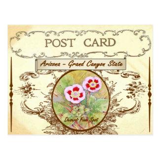 Vintage Arizona State Flower Postcard