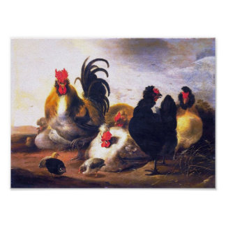 Vintage art-Animal-Bird-Chickens-Painting Poster