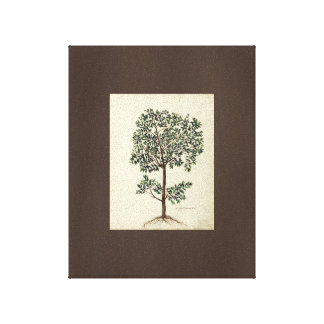 Vintage Art Drawing Botanical Olive Tree Canvas