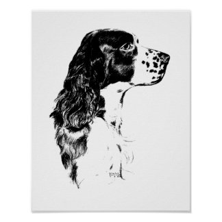 Springer spaniels black and white dresses