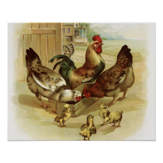 Vintage Art Farm Chickens Poster