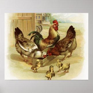 Vintage Art Farm Chickens Poster