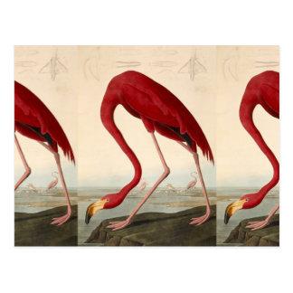 Vintage Art Flamingo Illustration Postcard