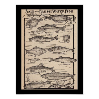 Vintage art fresh and saltwater fish chart