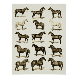 Vintage art Horse Breeds Chart printed poster wall