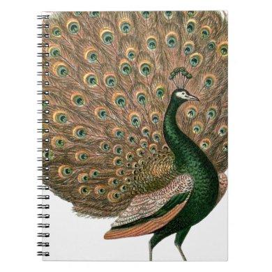 Vintage art Peafowl (peacock) plummage green gold Notebook