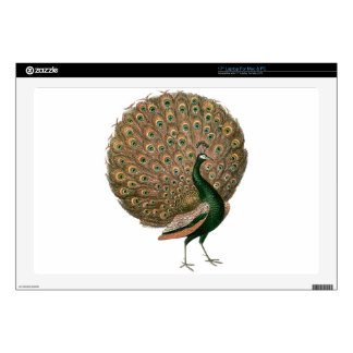 Vintage art Peafowl (peacock) plummage green gold Laptop Decal
