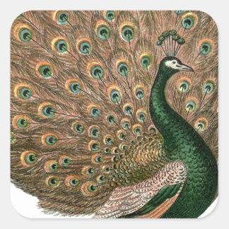 Vintage art Peafowl (peacock) plummage green gold Square Sticker