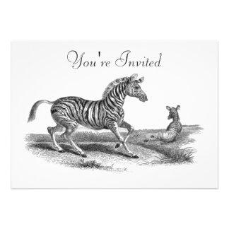 Vintage Art Zebra And Foal Animal Invitation