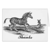 Vintage Art Zebra And Foal Thank You Card