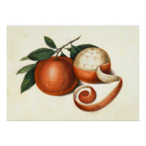 Vintage Asian Painting Oranges - Great for Kitchen Poster