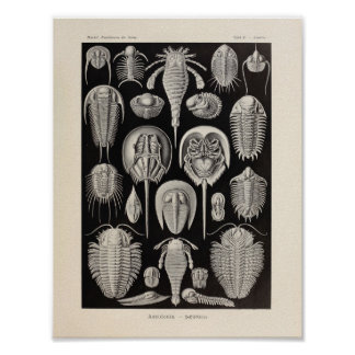 Vintage Aspidonia Color Ernst Haeckel Art Print
