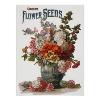 Vintage Assorted Annuals Seed Packet Poster