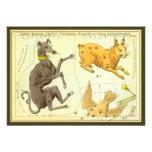 Vintage Astronomy, Celestial Map Star Chart in Sky Custom Invitations