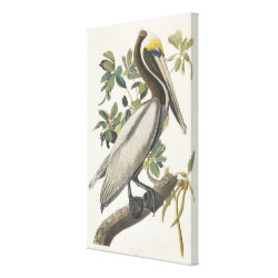 Premium Wrapped Canvas with Audubon's Brown Pelican design