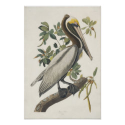 Matte Poster with Audubon's Brown Pelican design