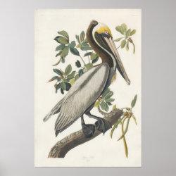 Matte Poster with Audubon's Brown Pelican design
