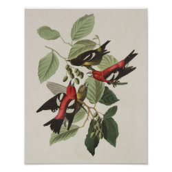 Matte Poster with Audubon's White-winged Crossbills design