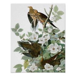 Matte Poster with Audubon's Mourning Dove design