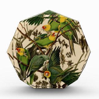 Vintage Audubon Parrot Acrylic Award