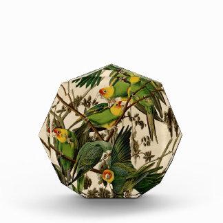 Vintage Audubon Parrot Award