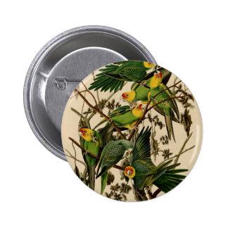 Vintage Audubon Parrot Button