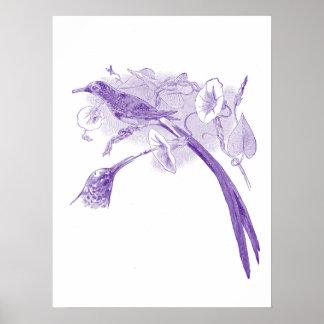 Vintage Avian Drawing   Purple   Sunbirds Poster