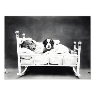 Vintage B&W Adorable Puppies in Cradle Photo Print