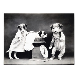 Vintage B&W Dogs in Clothes with Puppy Photo Print