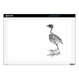 Vintage baby bird skeleton etching skin laptop skin