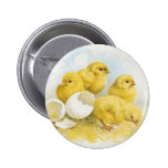 Vintage Baby Chickens Buttons