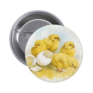 Vintage Baby Chickens Pinback Button