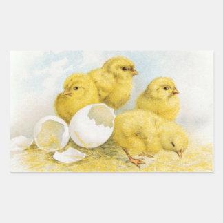 Vintage Baby Chickens Rectangular Sticker