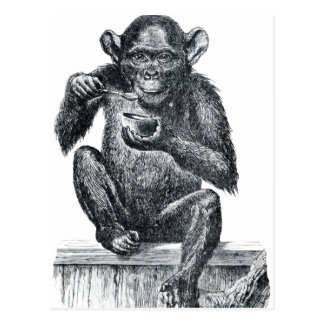 Vintage Baby Chimpanzee Drawing Postcard