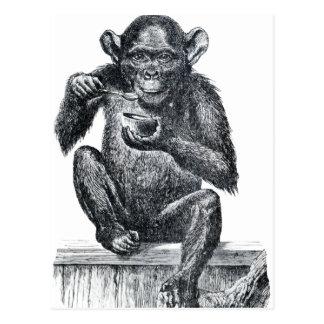 Vintage Baby Chimpanzee Drawing Post Card