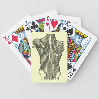 Vintage Back Anatomy Bicycle Poker Cards