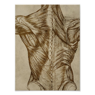 Vintage Back Anatomy Poster Medical Muscles Print