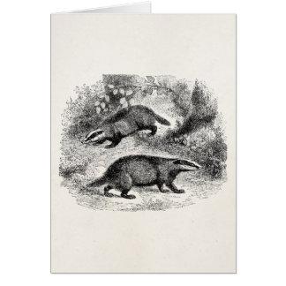 Vintage Badger 1800s Badgers Illustration Card