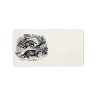 Vintage Badger 1800s Badgers Illustration Label