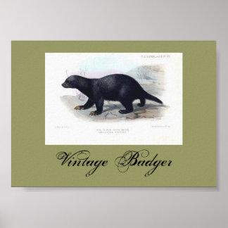 Vintage Badger Illustration  Poster