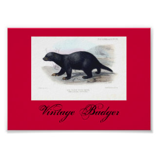 Vintage Badger Illustration Poster Red