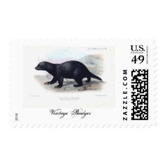 Vintage Badger Postage Stamps