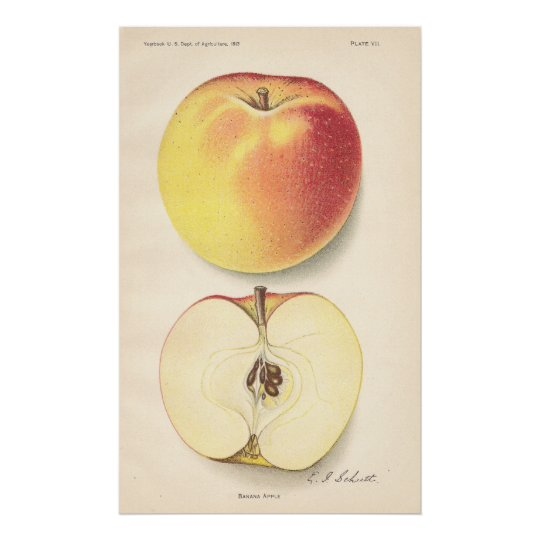 Vintage Banana Apple Poster