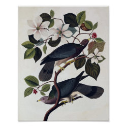 Matte Poster with Audubon's Band-tailed Pigeons design