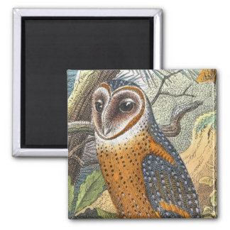 Vintage Barn Owl Painting 2 Inch Square Magnet