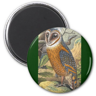 Vintage Barn Owl Painting Magnets