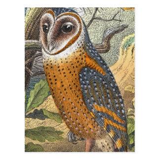 Vintage Barn Owl Painting Postcard