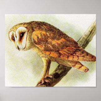 Vintage Barn Owl Poster Print