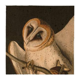 Vintage Barn Owls Illustratation (Audubon) Coaster